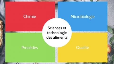 Baccalauréat en sciences et technologie des aliments