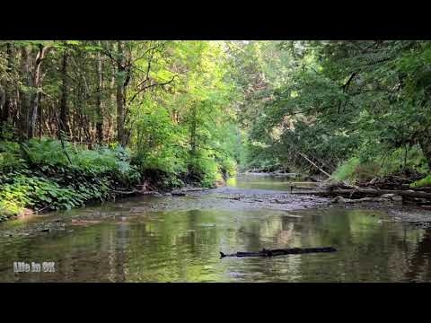 Life in 8K - Tranquil streams of the green summer Canadian woodlands