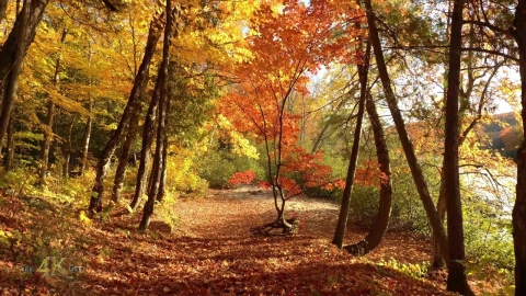 Teaser: The best of our magical Canadian fall forests - A stunning 8h...