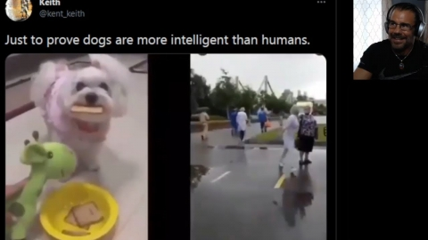Are Dogs SMARTER than Jabbo-Bound Humans!