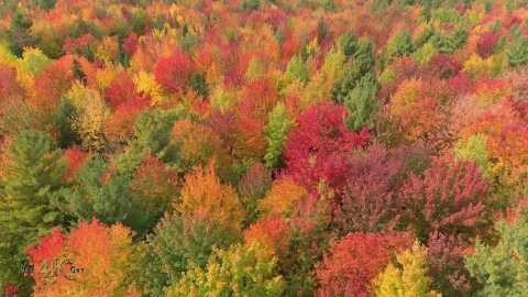 Two hour aerial flight over Canada's beautiful autumn forests in 4K