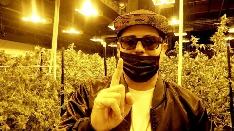 Jangueo en un cultivo de cannabis 🔥🔥🔥