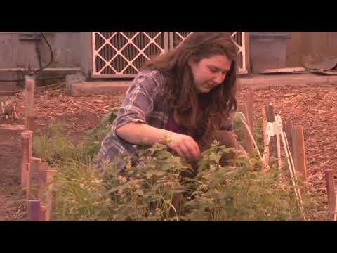 DEC   Technologie de la production horticole agroenvironnementale