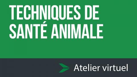 Techniques de santé animale - Atelier d'exploration virtuel
