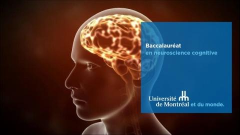 Baccalauréat en neuroscience cognitive
