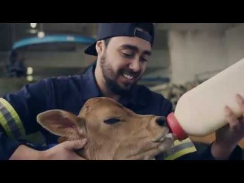 DEP | Production animale