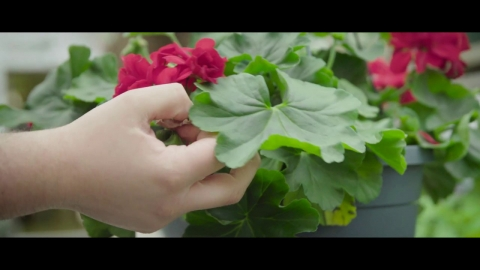DEP   Horticulture et jardinerie