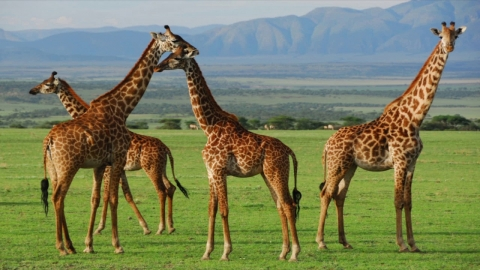 Top 10 Best Places to Visit in Africa 2017
