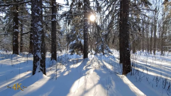 Two-hour nature walk in the snowy serene winter forests of Canada
